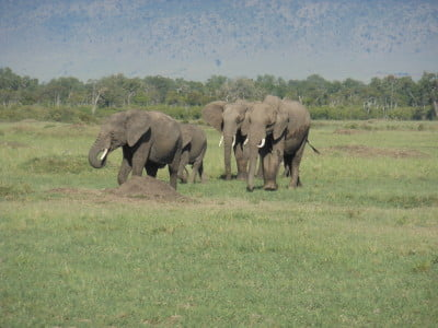 Photo of african elephants in the bush