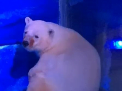 Photo of a polar bear in an indoor zoo enclosure