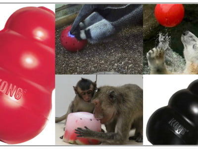 Image of zoo animals using enrihment toys