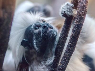 monkey holding onto a tree branch, Image © Viktor Kern on Unsplash