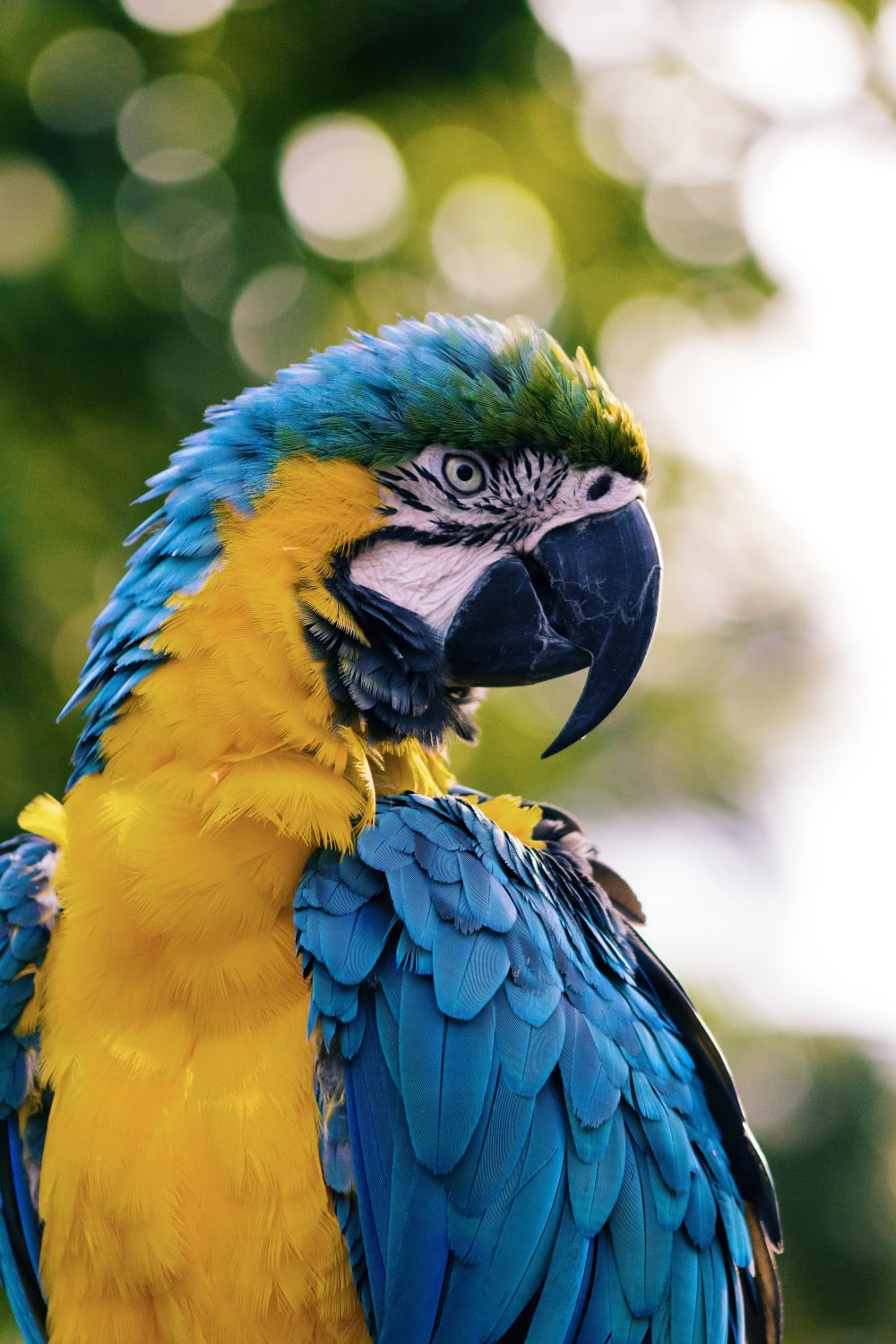 Blue and Yellow macaw, Image © Andrew Pons on Unsplash