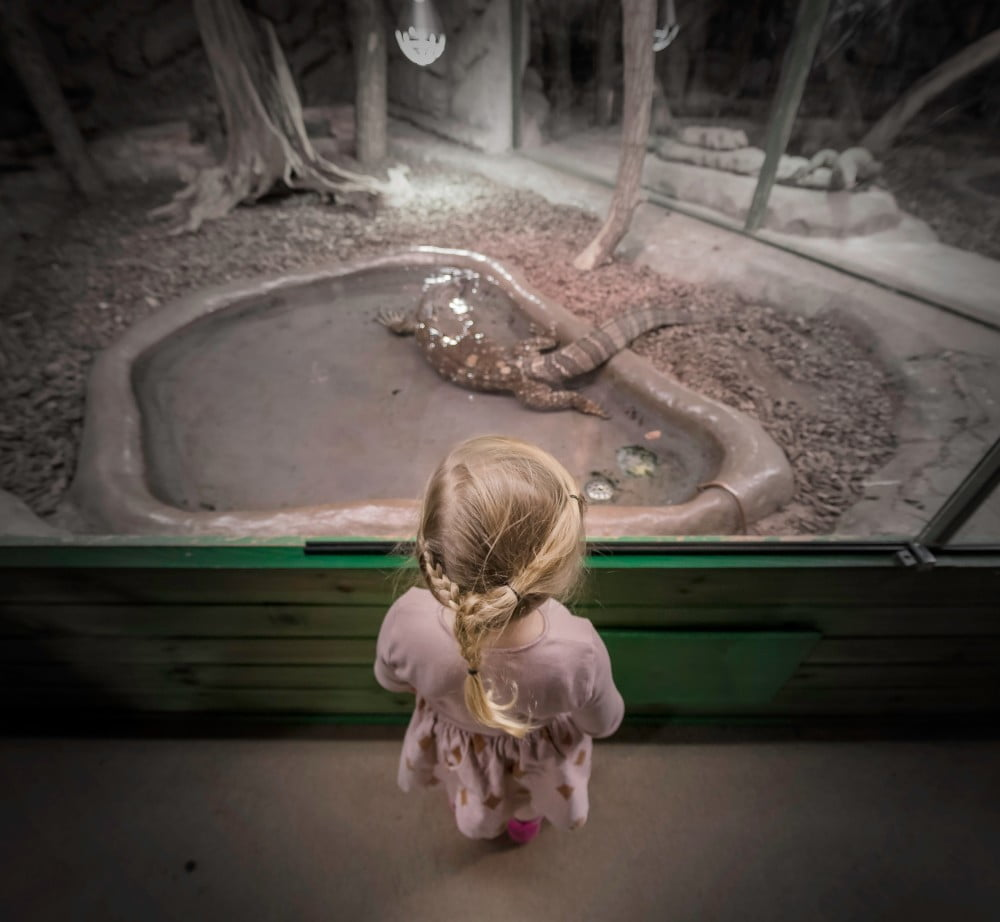 Child looks into a zoo enclosure at the zoo, Image © Joakim Honkasalo on Unsplash