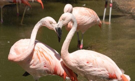 Pair of flamingos in a zoo, Image © Jennifer Regnier on Unsplash