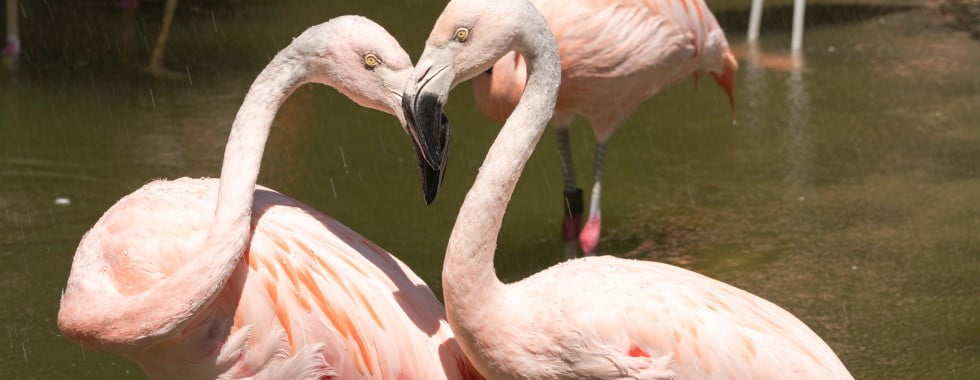 Pair of flamingos in a zoo, Image © Jennifer Regnier on Unsplash