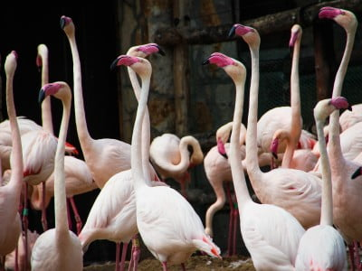 group of flamingos in a zoo, Image © Rosie Fraser on Unsplash