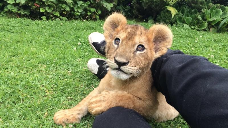 lion cub, Image source: www.bucketlist.org