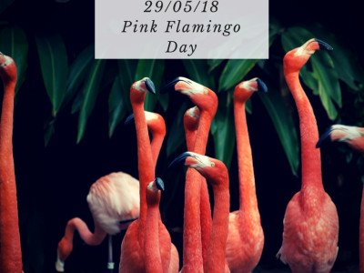 A group of flamingos