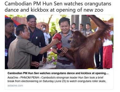 A tweet capture showing an animal show in a Cambodian zoo where orangutans are boxing each other