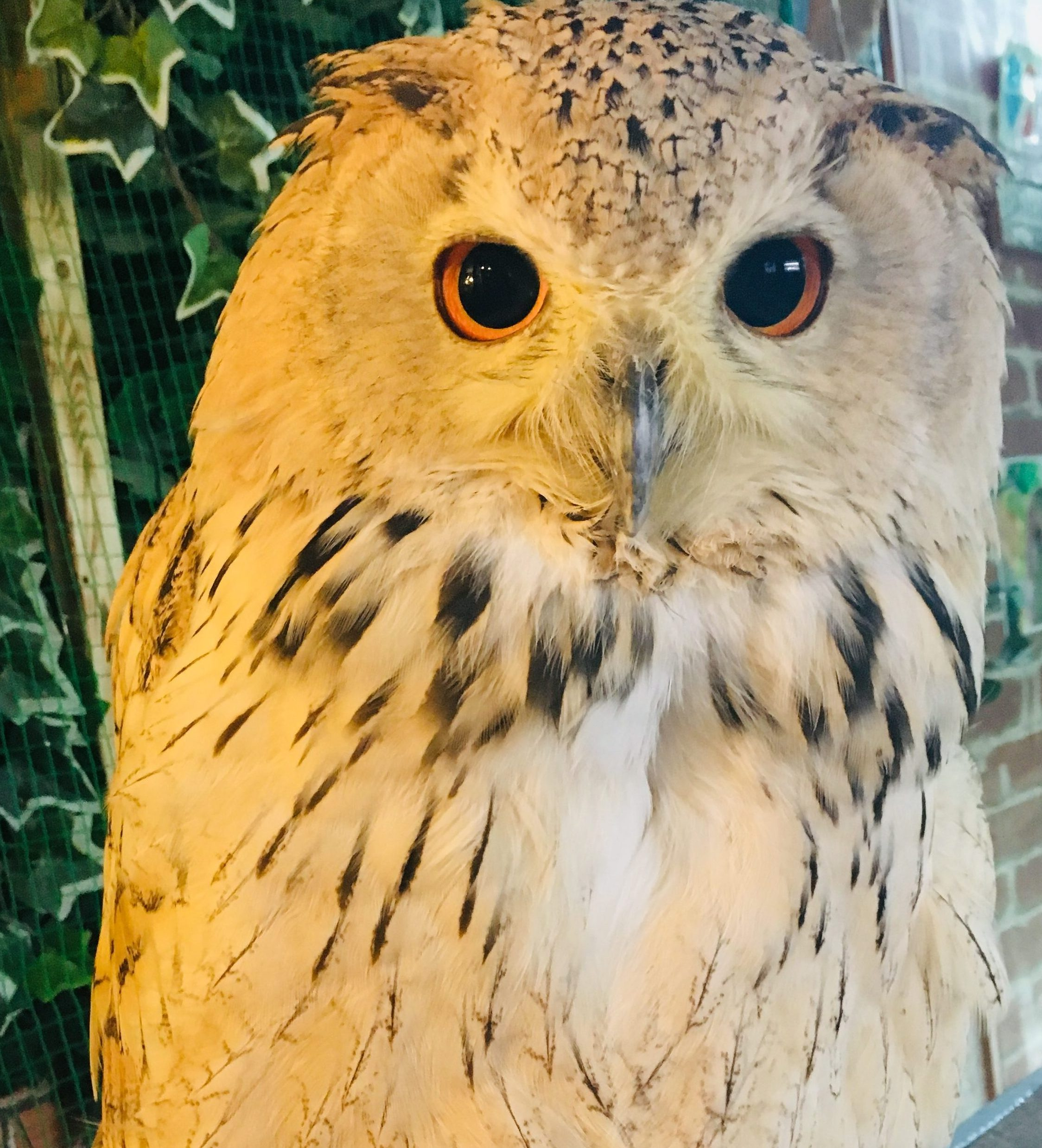 owl in an animal cafe in Japan
