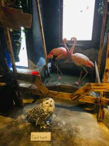 two flamingos standing in an animal cafe in Japan