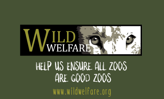 Video logo for Wild Welfare's Imagine If animation on animal emotions and zoo animal welfare