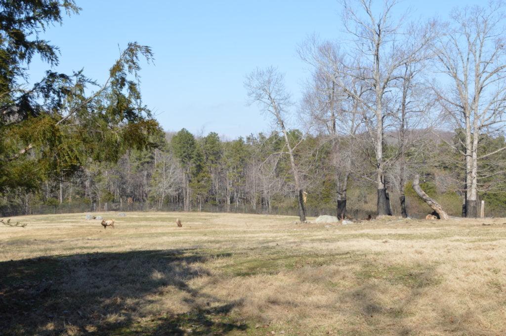 Large grasslands zoo enclosure at North Carolina Zoo