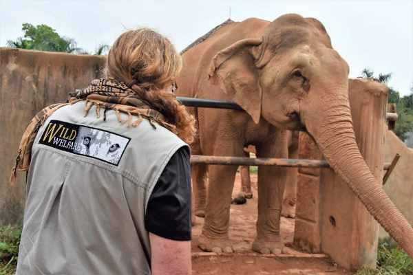 Elephant Wild Welfare