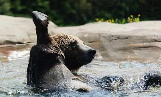 japan-bear-parks