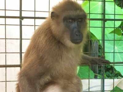 siti-monkey